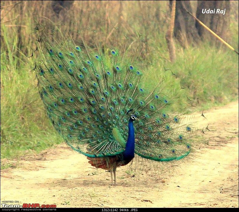 Into the Wild – Road trip to Dudhwa National Park & Tiger Reserve-img_9470-copy.jpg