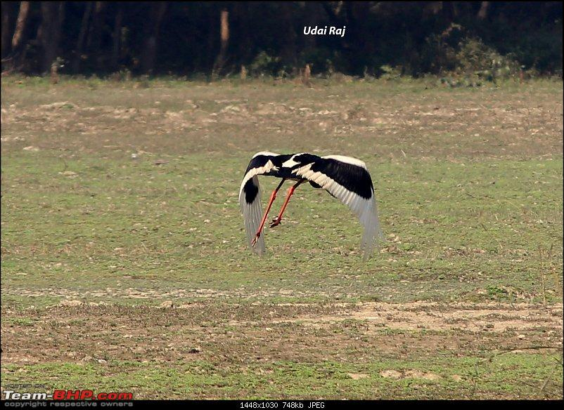 Into the Wild – Road trip to Dudhwa National Park & Tiger Reserve-black-necked-stork-3.jpg
