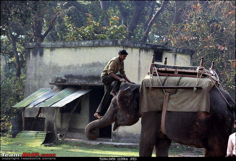 Into the Wild – Road trip to Dudhwa National Park & Tiger Reserve-5-copy.jpg
