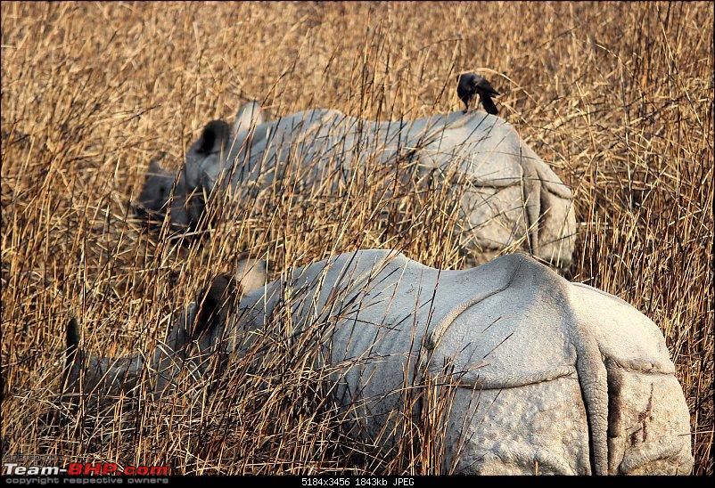 Into the Wild – Road trip to Dudhwa National Park & Tiger Reserve-img_9315-copy.jpg