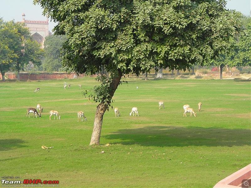 Agra, Fatehpur Sikri & Jhansi in a Maruti 800-8.jpg