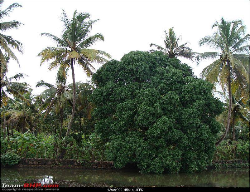 Gujarat - Kerala Odyssey !-goa-kerela-130.jpg