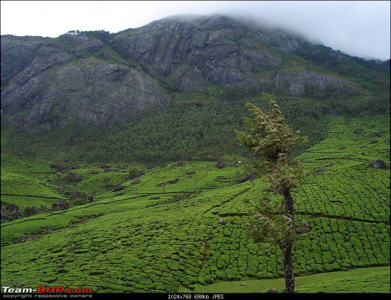 Bangalore � Munnar /Thekkady /Kochi in Swift D..-dsc08725.jpg