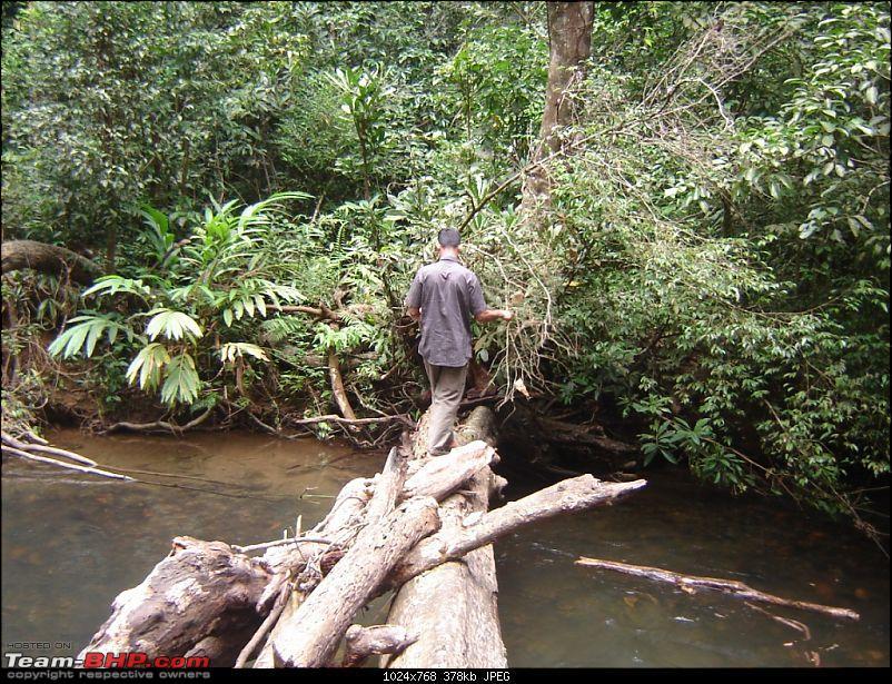 4 men, a xylo and trekking in silent valley-make-shift-bridge.jpg