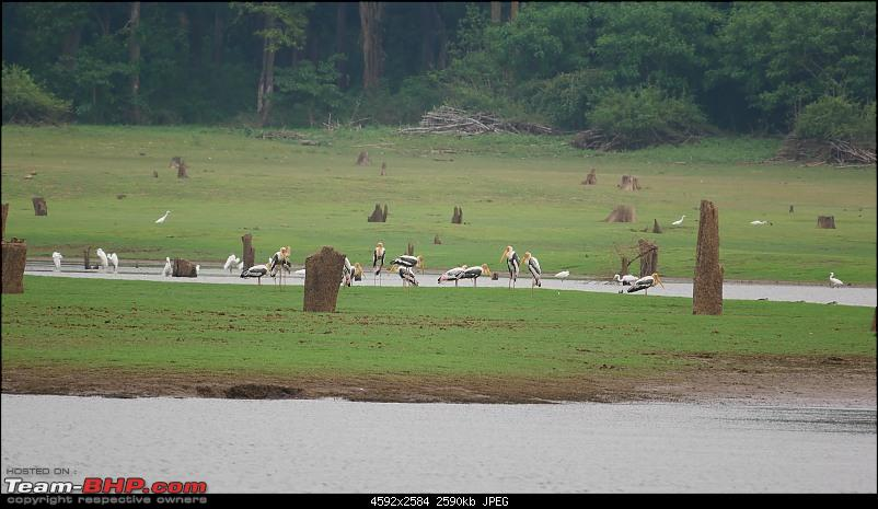 My 1st visit to Kabini - Amidst the Wilderness-p1050591.jpg