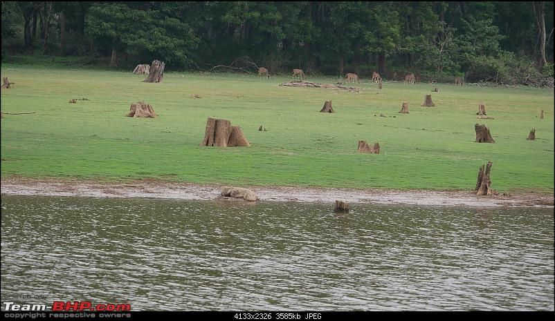 My 1st visit to Kabini - Amidst the Wilderness-p1050805.jpg