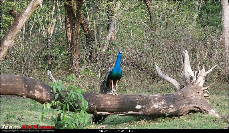 My 1st visit to Kabini - Amidst the Wilderness-p1060486.jpg