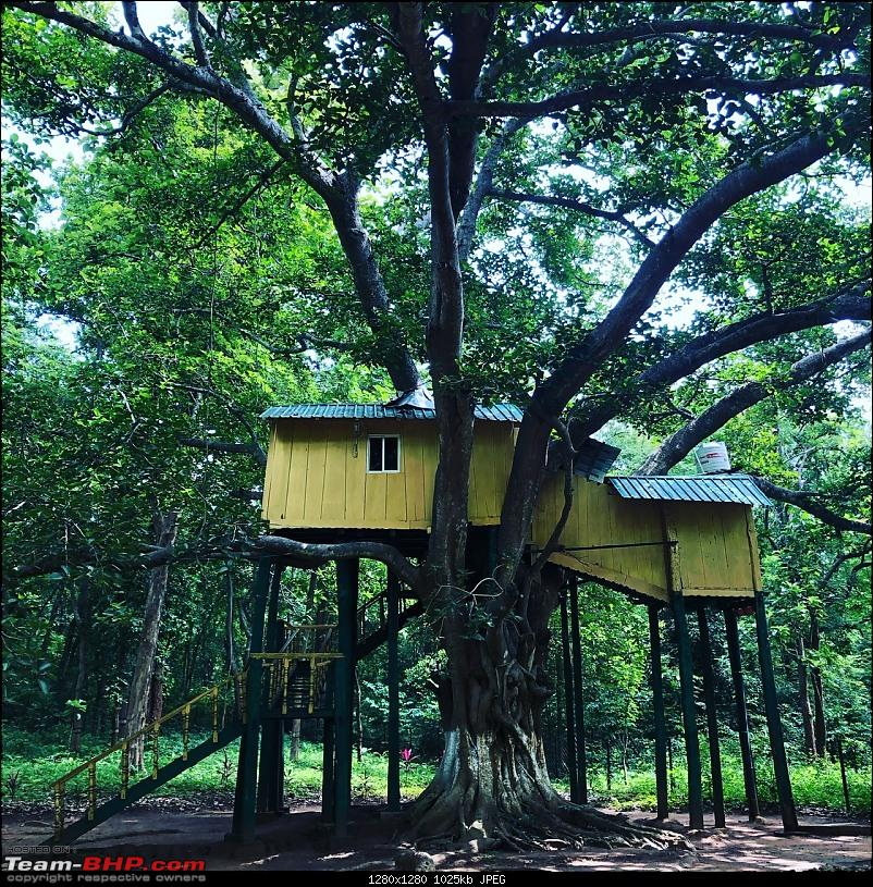 A giant squirrel & the tree house - Forests of Odisha-2c2cdc797e544e71a423417c12b5d427.jpeg