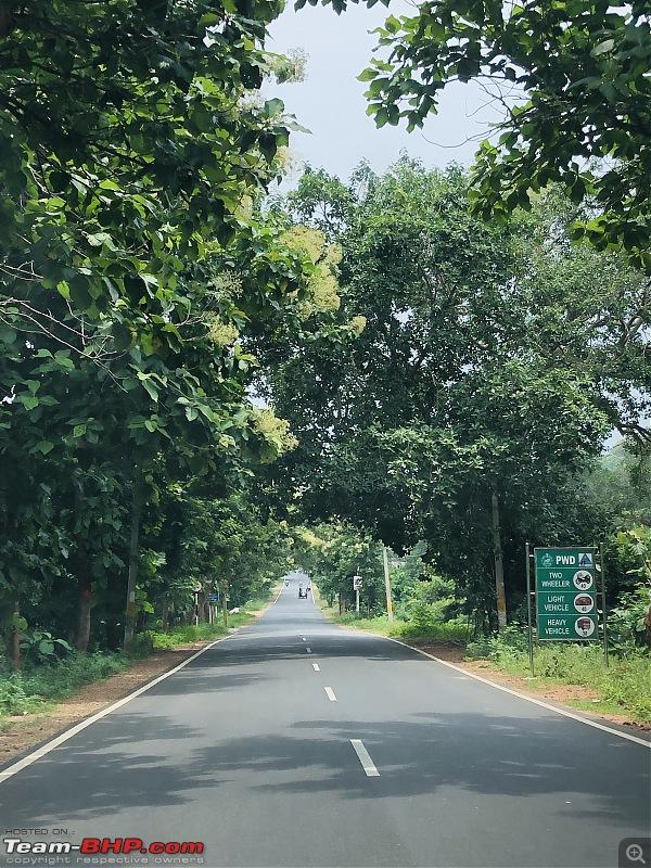 A giant squirrel & the tree house - Forests of Odisha-08aca1841802461290cfa6beeaa2dfa8.jpeg