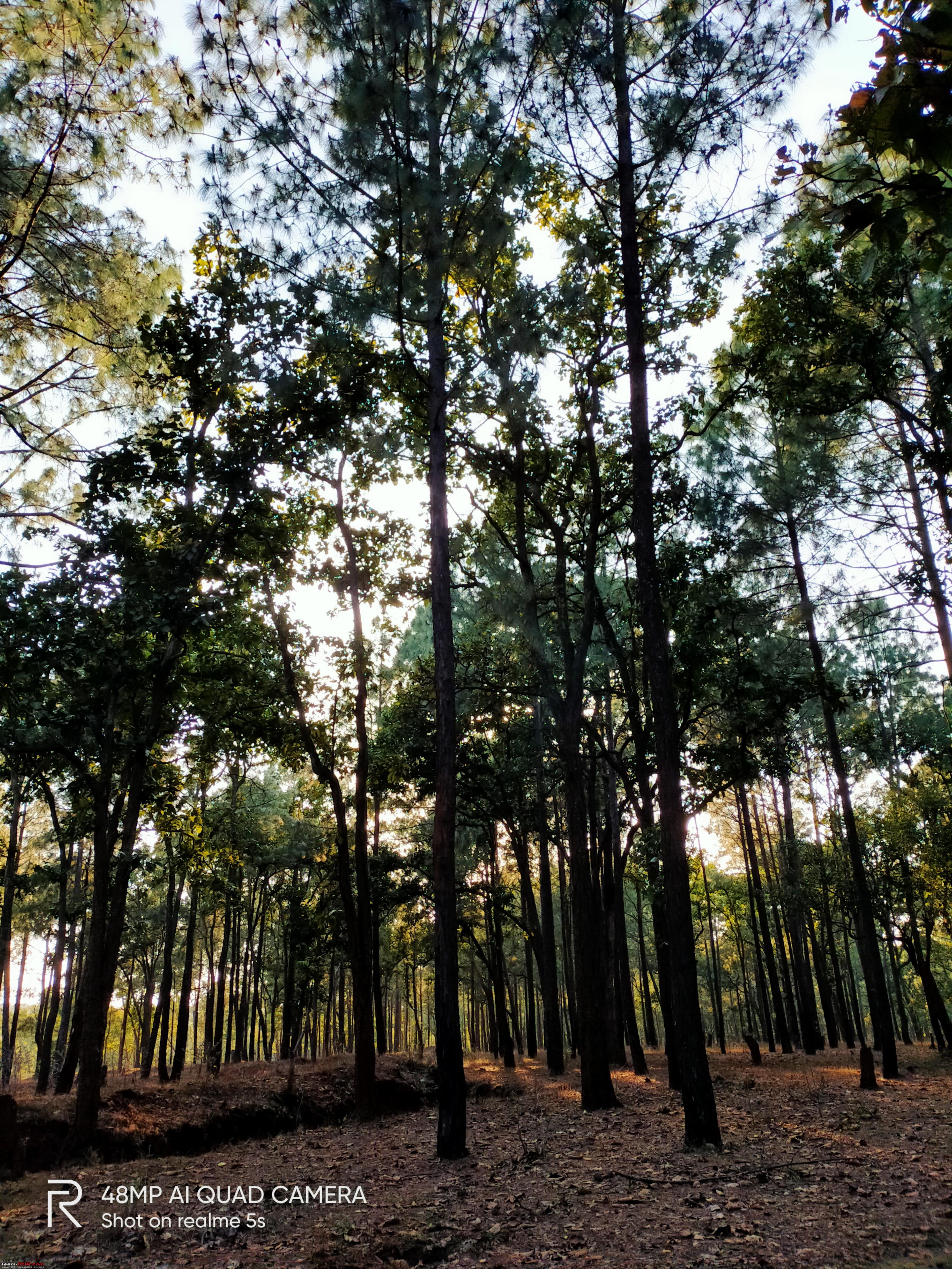 Drive to Patratu Valley and Netarhat - Beautiful places of ...