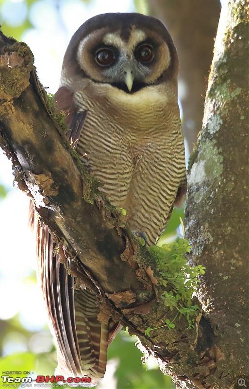 Birds of Himalayas - Sattal and Kedarnath Wildlife Sanctuary-745a8585.jpg