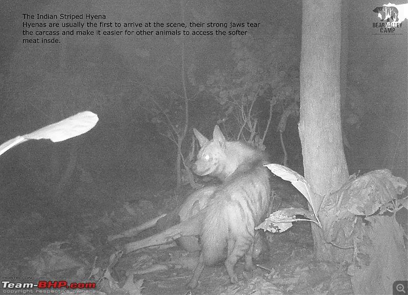 Our Wild Classroom - Panna Tiger Reserve-dscf0384.jpg