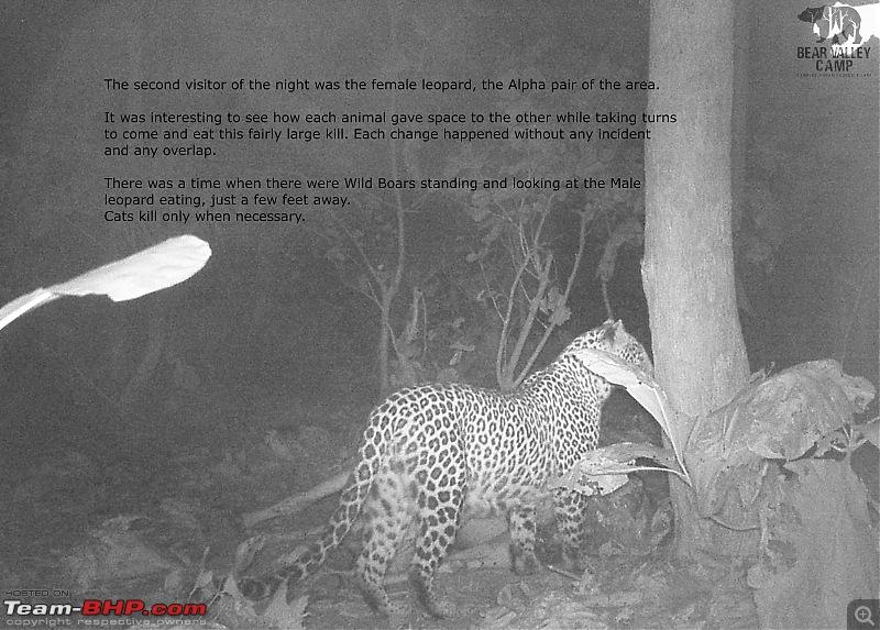 Our Wild Classroom - Panna Tiger Reserve-fml-leopard.jpg