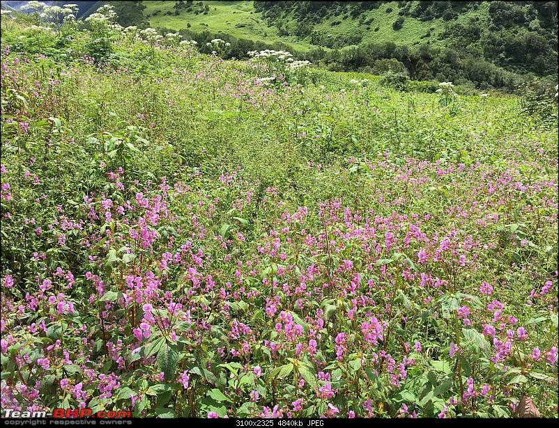 To the Valley of Flowers-img_8069.jpg