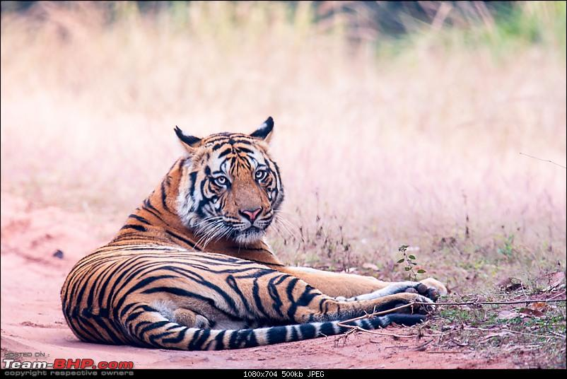 A lovely but incomplete trip to Bandhavgarh-dsc_10011.jpg