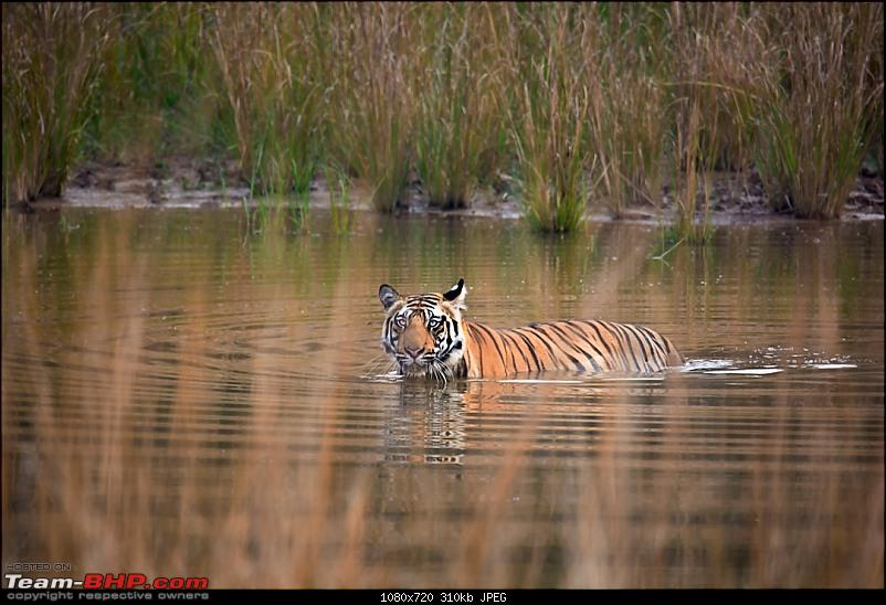 A lovely but incomplete trip to Bandhavgarh-dsc_10801.jpg