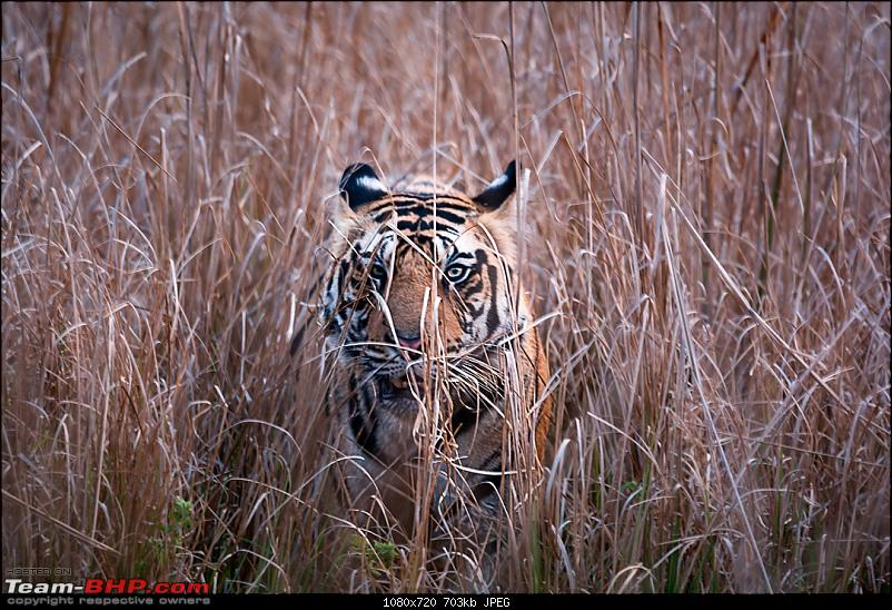 A lovely but incomplete trip to Bandhavgarh-dsc_10832.jpg