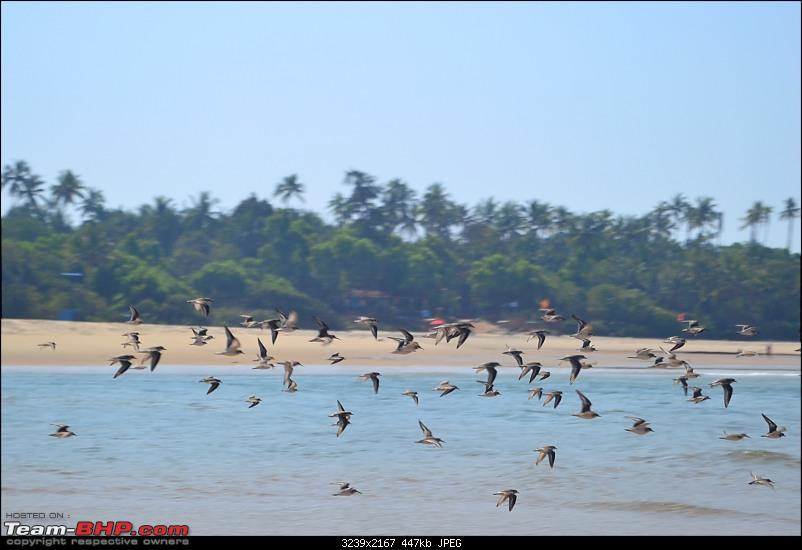 A 250 km bicycle ride along the Konkan Coast-csc_1037.jpg