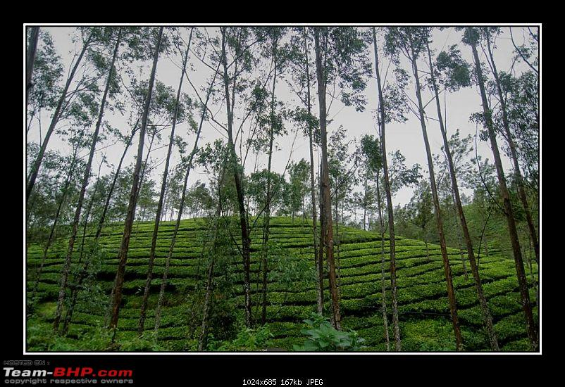 Travelogue : Scaling Vagamon and its heights-6_1-large.jpg