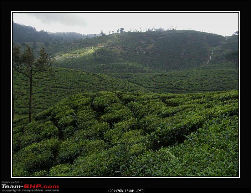 Travelogue : Scaling Vagamon and its heights-16-large.jpg