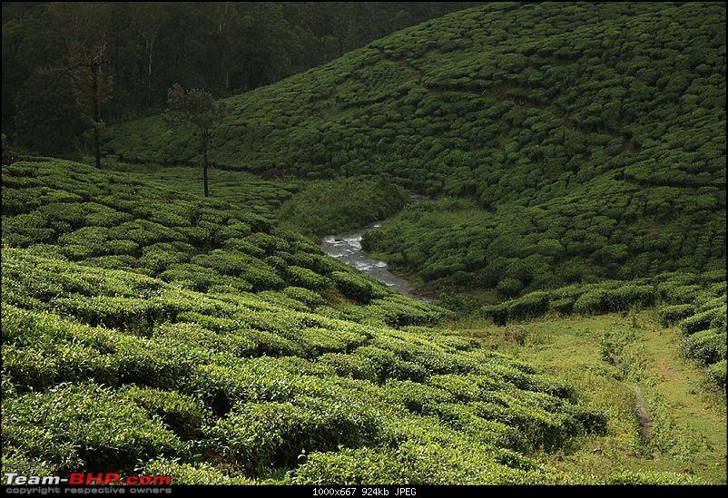 Travelogue : Scaling Vagamon and its heights-img_1503.jpg