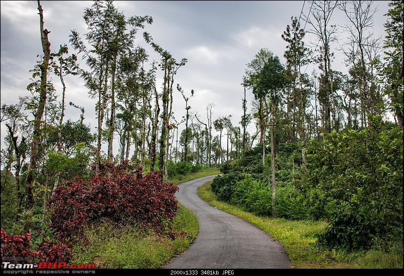 Chikmagalur: Driving through Coffee Country, with the windows down-dsc_0464.jpg
