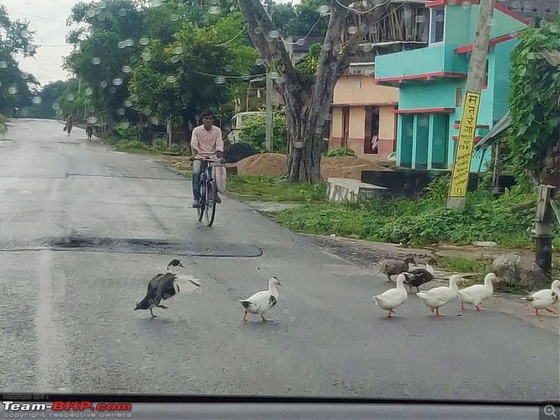 Drive to Scenic Massanjore & Serene Shantiniketan-08.-ducks-crossing.jpg