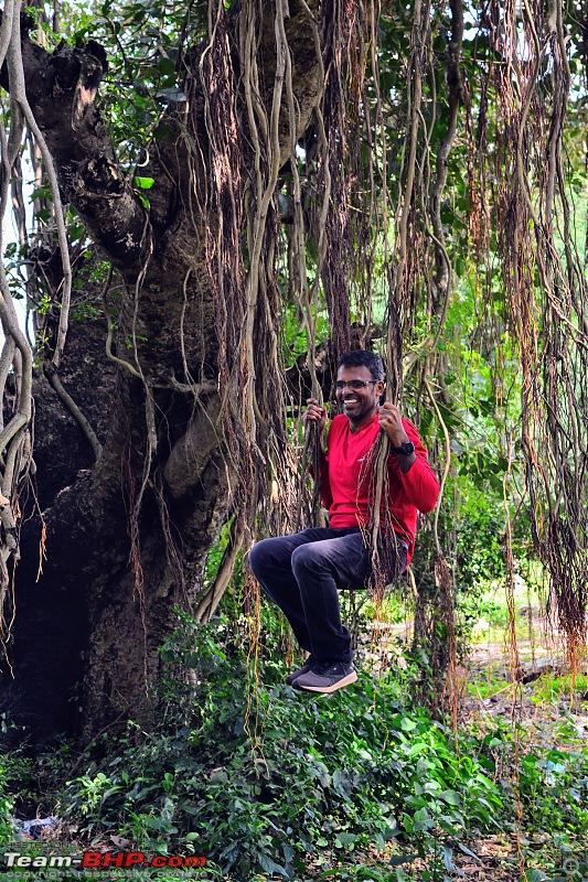 Holiges, a Coracle and a Banyan Tree - Weekend Drive to Shimoga-graaja-banyan-tree.jpg