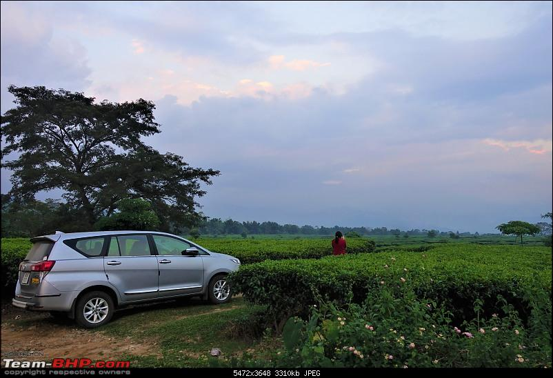 Autumn Drive in an Innova Crysta to Dooars, Kolakham, Kalimpong & Darjeeling-39.-car-into-tea-garden.jpg