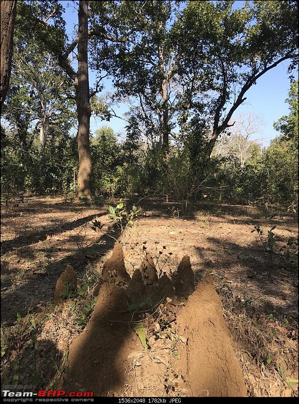 A 3700 km road-trip into the jungles, hills and villages of magnificent Madhya Pradesh-trail-behind-lodge.jpeg