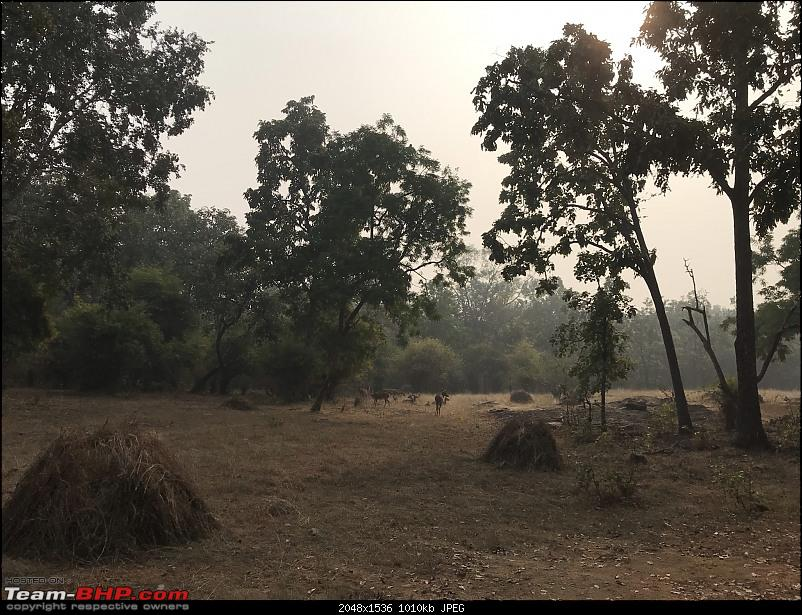 A 3700 km road-trip into the jungles, hills and villages of magnificent Madhya Pradesh-deers-chilling-out.jpeg