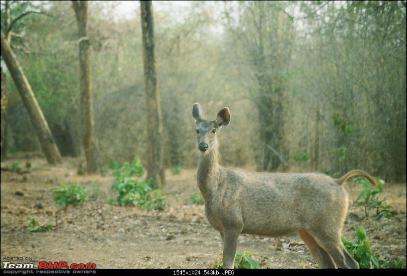 A visit to the Sher khan's den- Tadoba Andhari tiger reserve.-73110006.jpg