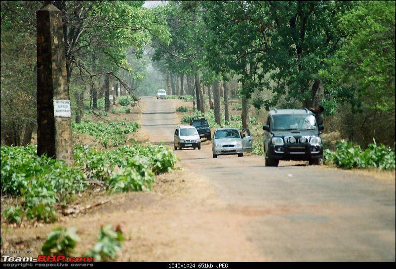 A visit to the Sher khan's den- Tadoba Andhari tiger reserve.-73110027.jpg