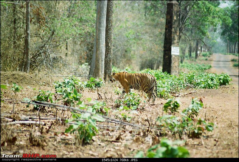 A visit to the Sher khan's den- Tadoba Andhari tiger reserve.-2.1.jpg