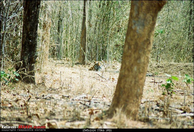 A visit to the Sher khan's den- Tadoba Andhari tiger reserve.-2.4.jpg