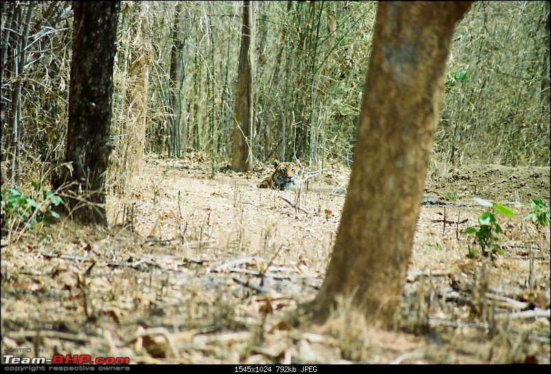 A visit to the Sher khan's den- Tadoba Andhari tiger reserve.-2.jpg