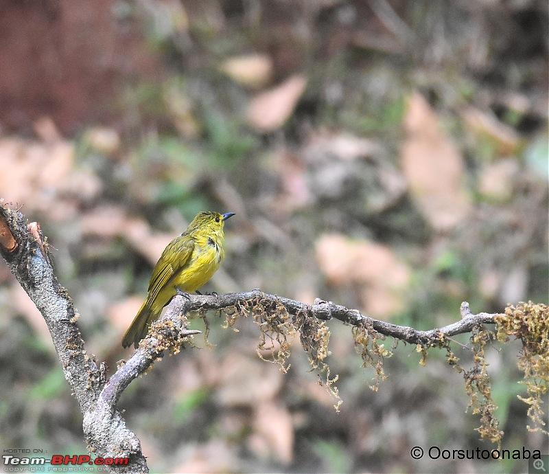 The Birds of Dandeli & Ganeshgudi-g1.jpg
