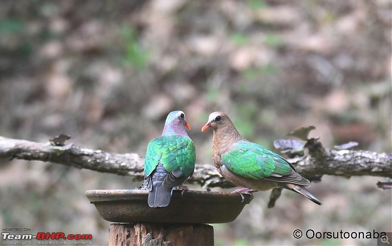 The Birds of Dandeli & Ganeshgudi-g6.jpg