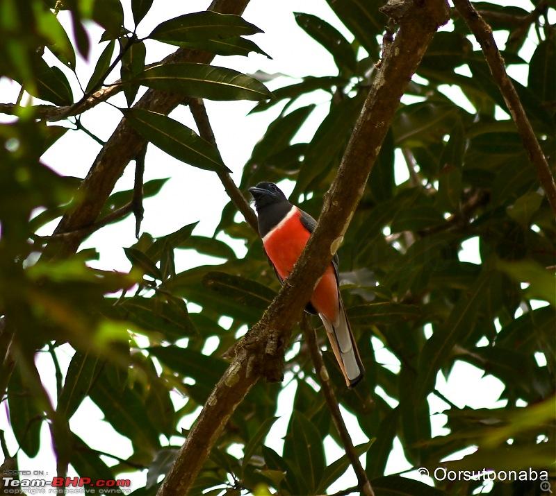 The Birds of Dandeli & Ganeshgudi-mt1.jpg