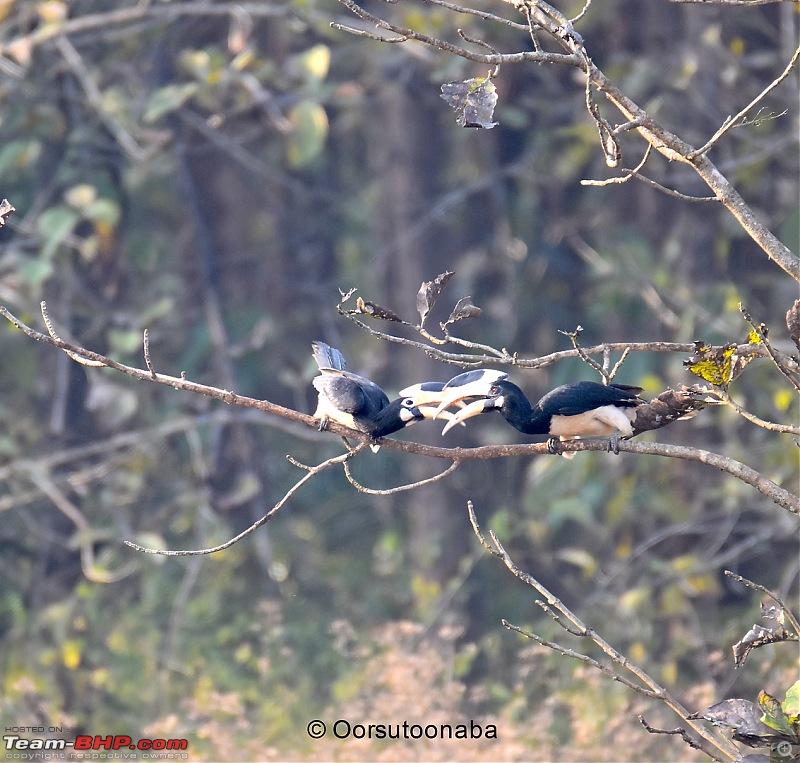 The Birds of Dandeli & Ganeshgudi-m1.jpg
