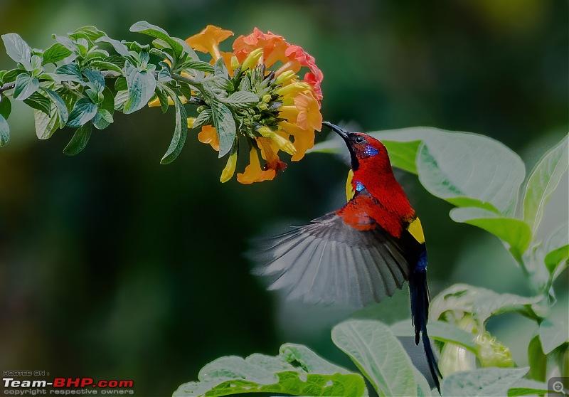 Organic Holi Colours of Neora Valley-_dsc3172finedenoise.jpg
