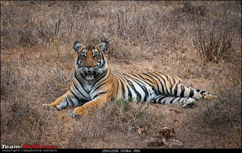 Cars, Wildlife and Photography Lessons at Kabini-dsc_23612.jpg