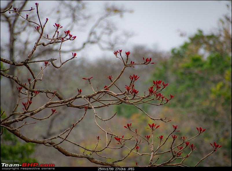 Cars, Wildlife and Photography Lessons at Kabini-dsc_17473.jpg