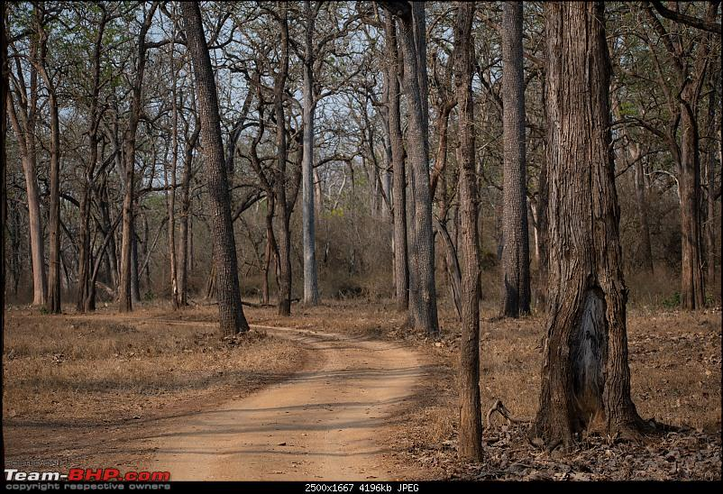 Cars, Wildlife and Photography Lessons at Kabini-dsc_2511.jpg