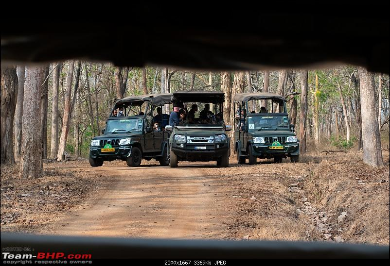 Cars, Wildlife and Photography Lessons at Kabini-dsc_2911.jpg