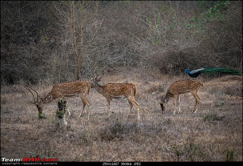 Cars, Wildlife and Photography Lessons at Kabini-dsc_2096.jpg