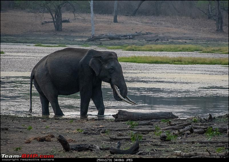 Cars, Wildlife and Photography Lessons at Kabini-dsc_2633.jpg