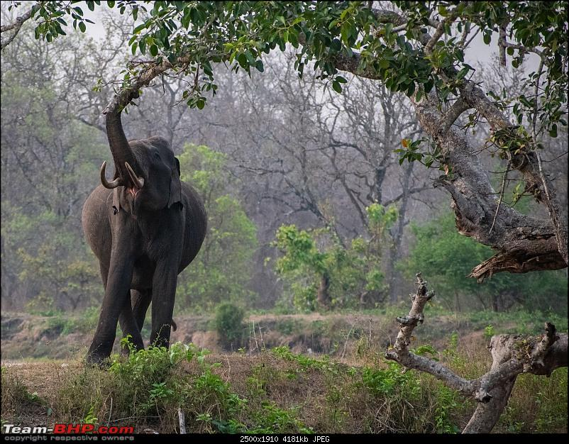 Cars, Wildlife and Photography Lessons at Kabini-dsc_27092.jpg