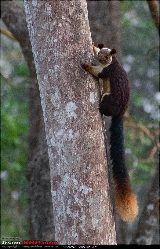 Cars, Wildlife and Photography Lessons at Kabini-dsc_27552.jpg
