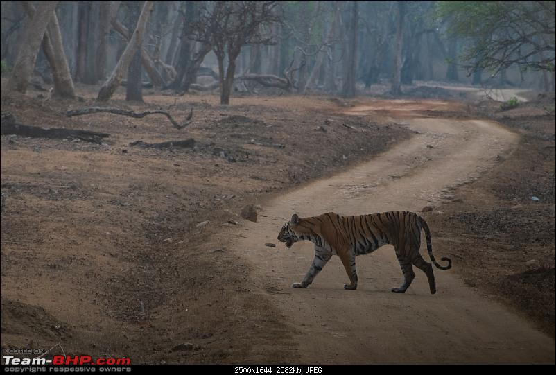 Cars, Wildlife and Photography Lessons at Kabini-dsc_1864.jpg